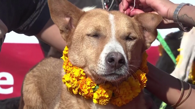 Festival of the Dogs Celebrated in Nepal